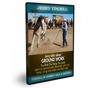 groundwork_dvd_rendered-500x500