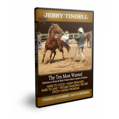 ten most wanted dvd