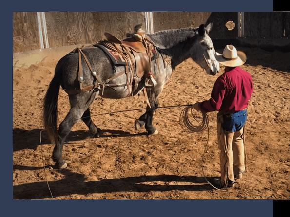 ground work with horse