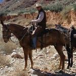 man riding a horse in an open field