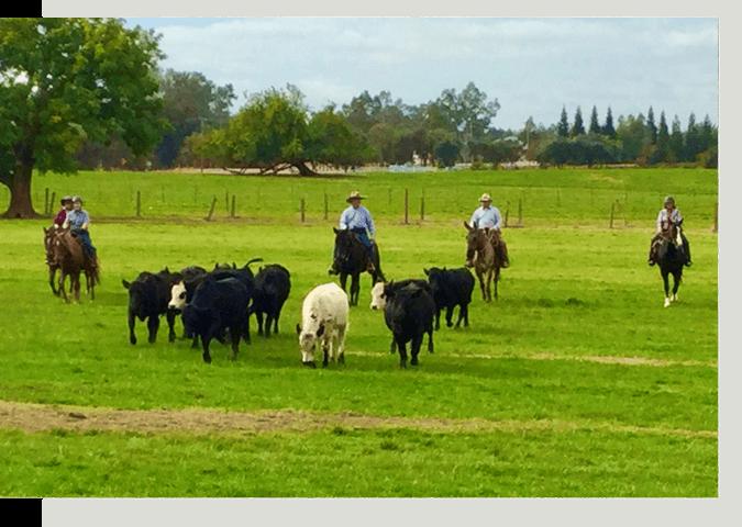 Horses in open field
