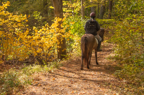 horse and rider on trail