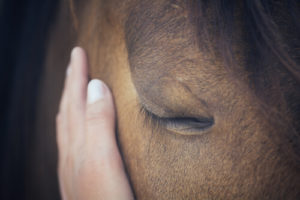 horse with gentle hand